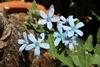 種からオキシペタラム