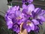 ベランダにお花畑登場。フリージア
