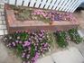 南側外側花壇にきれいに花を咲かせたい