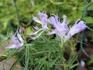 青海松葉吹詰紫細切采咲牡丹