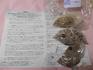 種から育てるリトープス