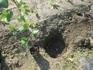 ブドウ栽培リベンジです。