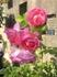 花咲け!ホームアンドガーデン2018