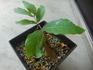 仏教×植物