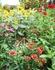 夏の花の植え替え失敗
