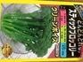 グリーンボイス、種から茎ブロッコリー