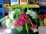 タテニワ・垂直栽培 収納ボックスでジニア・日々草寄せ植え栽培(終了)