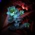不思議な植物★ユーフォルビア ミルシニテス