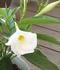 2色で寄せ植えサンパラソル