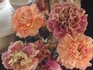 切り花で購入したカーネーションの茎を挿して再び花を咲かせよう。