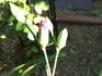 植える場所で花びらの数が変わる?