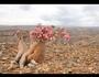 砂漠のバラを目指して