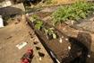 さてイチゴを植えよう ニンニクも一緒に