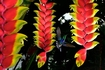 すばらしい熱帯花木
