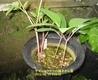 園芸のおもしろさを倍増するタネ播き、挿し木、接ぎ木、取り木の方法