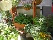 ベランダが私のお庭