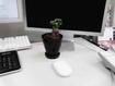 デスクで植物を愛でる会