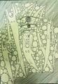 マニー半島:キワワノ探索 報告書 1