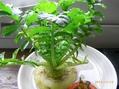 野菜を最後まで食べる4