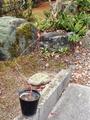 モミジの針金掛けとデンマークカクタスの水やり