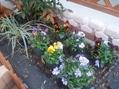 花壇(地植え)の植え替え