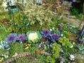 今日の庭・・・咲いてる~