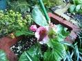 会議が終わって帰ってきた雨のお庭で…