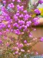 寒い中咲く花[i:203]