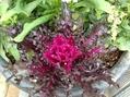 寒さの中で咲く花