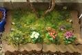 今日の園芸作業!