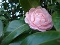 春を待つ花芽 ②