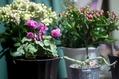 部屋を彩る植物たち