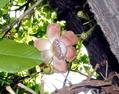 沙羅双樹の花の咲く寺