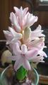 春[i:237]の陽気[i:158]
