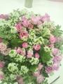 関東東海花の展覧会・4
