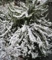 午後から本降りの雪
