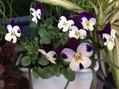 [i:148] 花々 [i:148]
