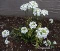 2月の宿根草