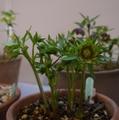 展示会のお誘い♪「花菜ガーデン」2日目終了