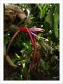 タニとチラの花と…花?