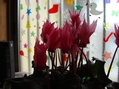 ピンクの花・集合