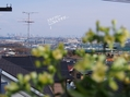 サギソウの植え替え&カランコエ