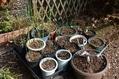 3月の庭から…暖かい日は庭をウロウロ