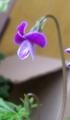 雪山遭難者(植物ですが)の捜索