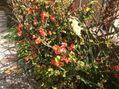 春は馬車に乗って②木の花