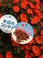 『日本フラワー&ガーデンショウ』