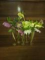 クリスマスローズを切り花で楽しむ・2