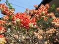 春は馬車にのって⑤木の花