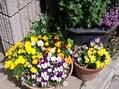 今日は春らしい日でした。
