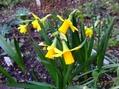 庭も春めいてきました